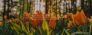 Ulasan Buku : Ikigai; The Japanese Secret to a Long and Happy Life